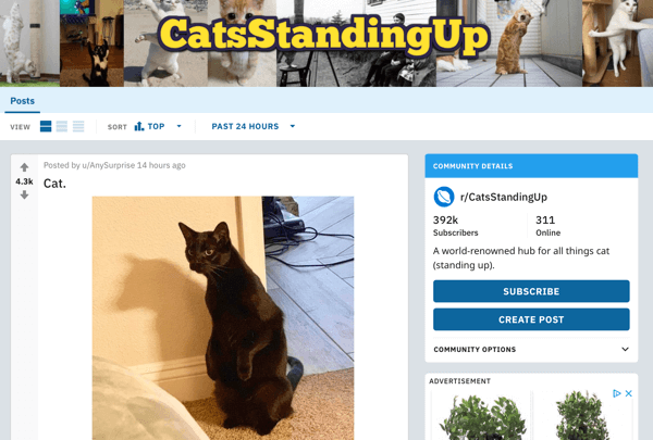 How to market your business on Reddit, example post from subreddit r/CatsStandingUp